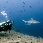When Diving in the Southern Atolls: Addu to Koodoo