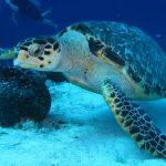 Return to Scuba Diving