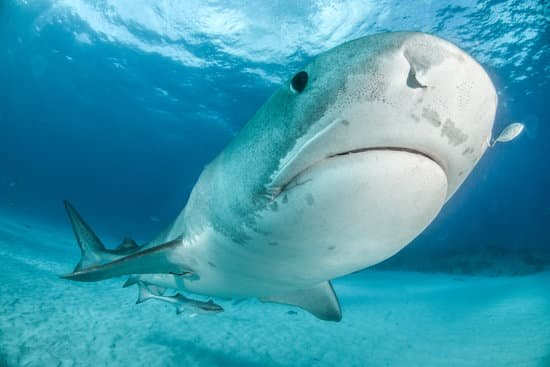 Diving in December; Maldives