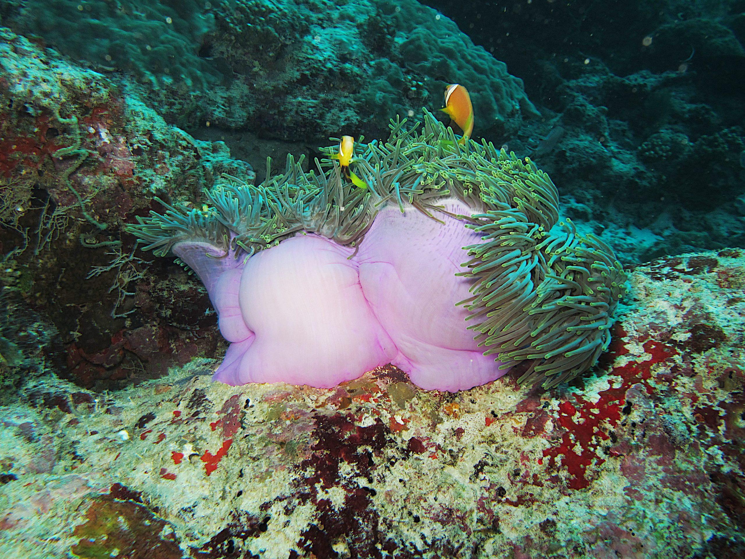 scuba diving holiday maldives